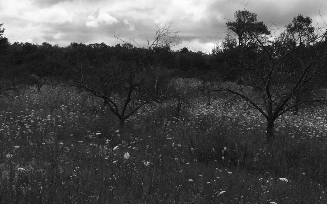 Orchard Memories